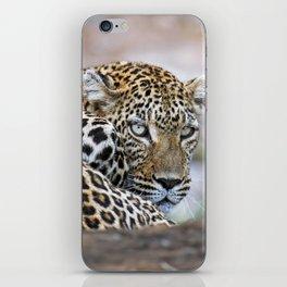Leopard in a tree, Africa wildlife iPhone Skin