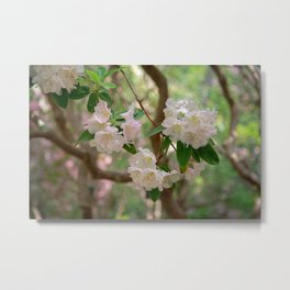 White Rhododendron Flowers Metal Print