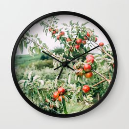 Red Apples In Orchard Tree Wall Clock