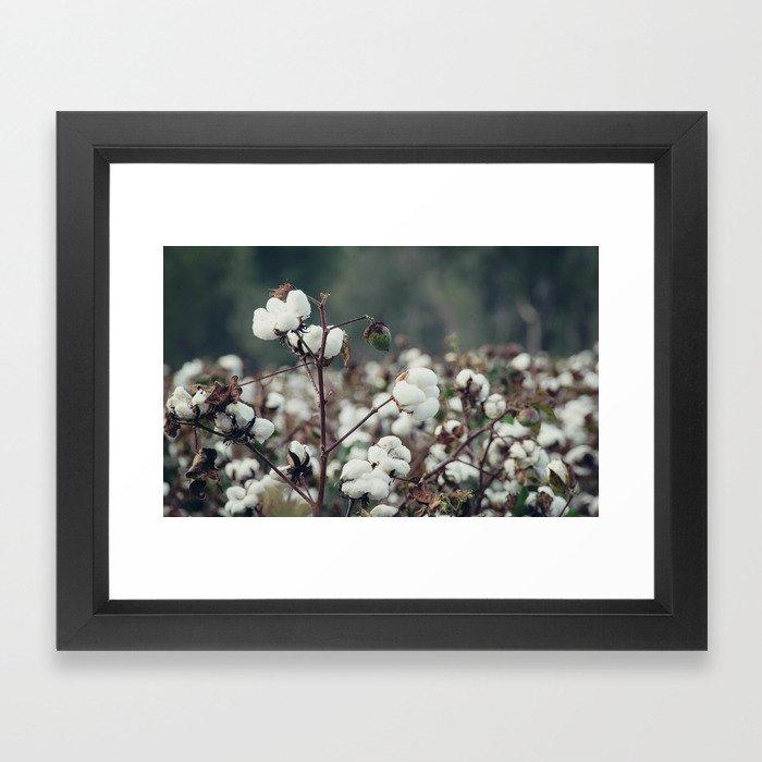 Cotton Field 5 Framed Art Print