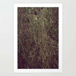 Tangled II Art Print