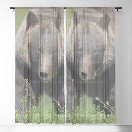 Brown Bear - Alaska Sheer Curtain