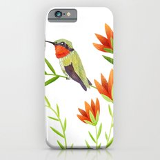 Ruby Throated Hummingbird iPhone 6s Slim Case