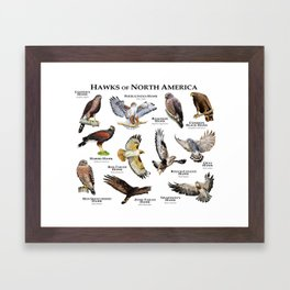 Hawks of North America Framed Art Print