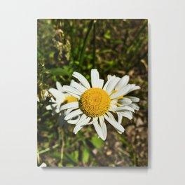 Daisy, Daisy Metal Print