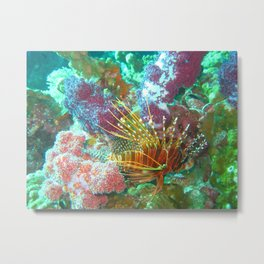 Lionfish and Corral Metal Print