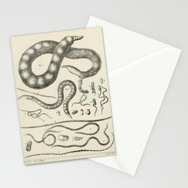 Vintage Scientific Print - 1824 - Nematode Worms Stationery Cards