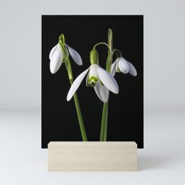 Spring Springs Eternal Mini Art Print