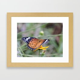 Indian Fritillary in Hangzhou Framed Art Print