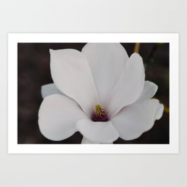 Magnolia Portrait Art Print