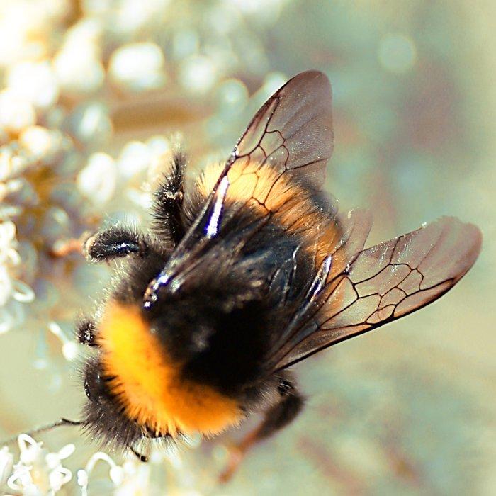 Bumblebee Leggings