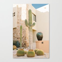 Cabo Cactus VII Canvas Print
