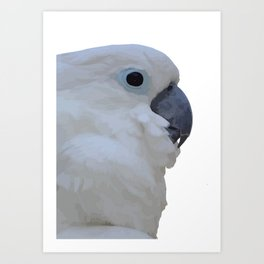 Side Portrait Of A Blue-Eyed Cockatoo Isolated Art Print