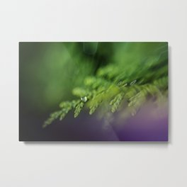 dew drops on the cedar; early morning macro  Metal Print