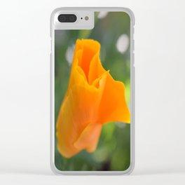 Orange California Poppy, Eschscholzia californica, Flower Clear iPhone Case