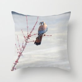Coy Sparrowhawk (Kestrel) 6 Throw Pillow