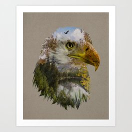 The American Bald Eagle Art Print
