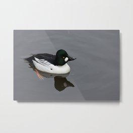 Golden Eyed Duck Metal Print