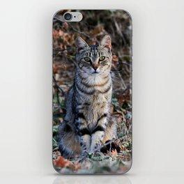 Sitting cat posing iPhone Skin