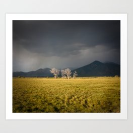 Lone Trees in Taos, New Mexico Art Print