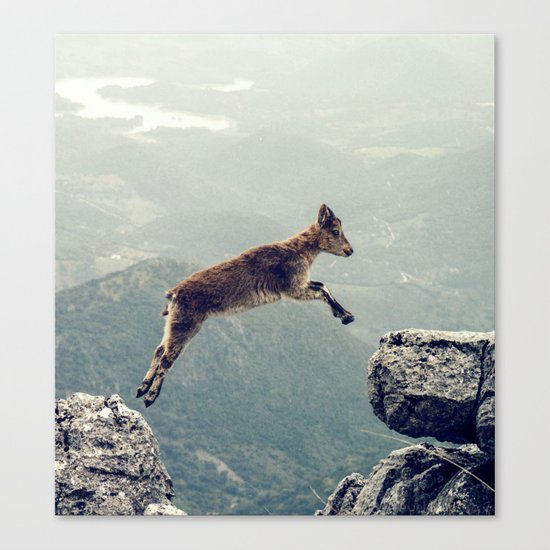 Mountain Goat Canvas Print