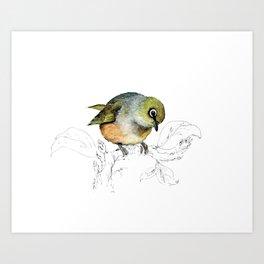 Sylvereye - Waxeye bird Art Print