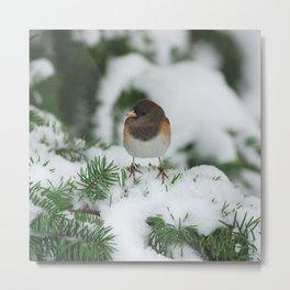 Junco In The Snow... Metal Print