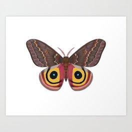 io moth (Automeris io) female specimen 2 Art Print