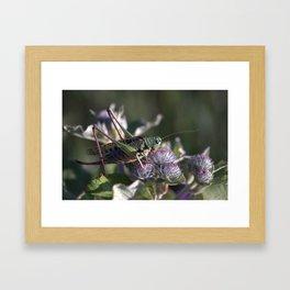 Grasshopper 4110 Framed Art Print