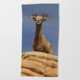 Desert_Bighorn_Sheep Portrait II - Valley_of_Fire State_Park Beach Towel