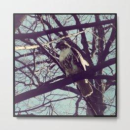 the falcon Metal Print