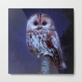 cute little screech owl Metal Print