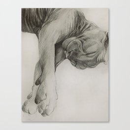 Pencil drawing kitten sphinx, graphic art Canvas Print