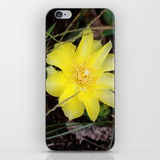 cactus flower iPhone & iPod Skin