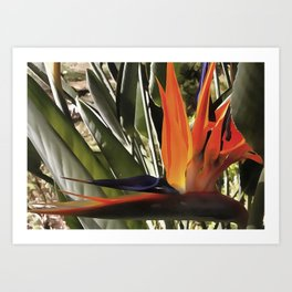 Bird of Paradise Strelitzia Art Print