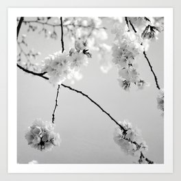 Cherry Blossoms in Black and White Art Print