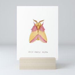 Rosy Maple Moth Mini Art Print