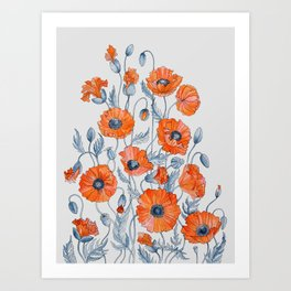 Poppies botanical art Art Print