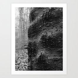 Cracked Bark on a Knobby Tree Art Print