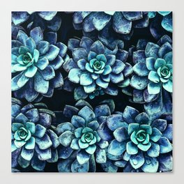 Blue And Green Succulent Plants Canvas Print