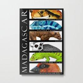Animals of Madagascar Metal Print