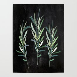 Eucalyptus Branches On Chalkboard Poster