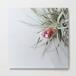 Flowering Air Plant Metal Print