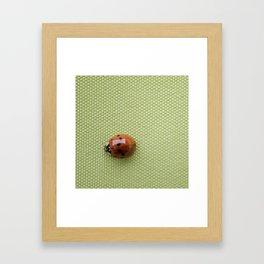 Beetle. Framed Art Print