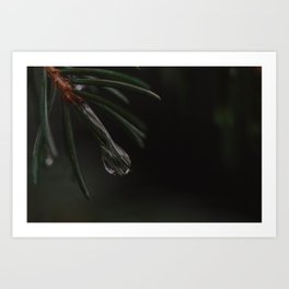 ON PINES AND NEEDLES Art Print
