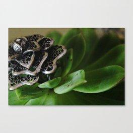 Brooch Canvas Print