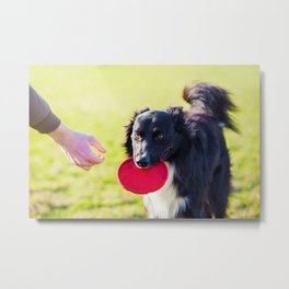 Dog fetch frisbee Metal Print