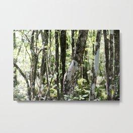 Floridian Woods Metal Print