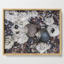 Periwinkles and Barnacles on a rock Serving Tray