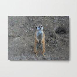Prairie Dog Metal Print